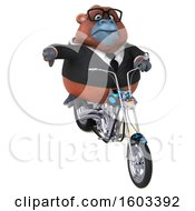 3d Business Orangutan Monkey Biker Riding A Chopper Motorcycle On A White Background