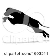 Silhouetted Mastiff Dog Jumping With A Reflection Or Shadow On A White Background