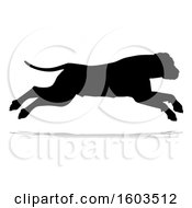 Silhouetted Mastiff Dog With A Reflection Or Shadow On A White Background