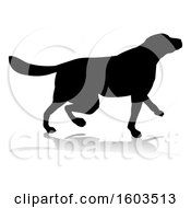 Silhouetted Golden Retriever Dog With A Reflection Or Shadow On A White Background
