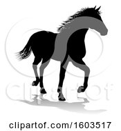 Poster, Art Print Of Silhouetted Horse With A Reflection Or Shadow On A White Background