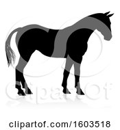 Silhouetted Horse With A Reflection Or Shadow On A White Background