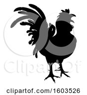 Black Silhouetted Rooster