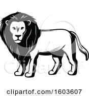 Clipart Of A Male Lion In Black And White Royalty Free Vector Illustration