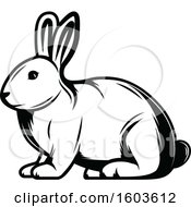 Rabbit In Black And White