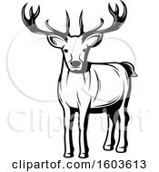Buck Deer In Black And White