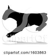 Silhouetted Bull Terrier Dog With A Reflection Or Shadow On A White Background