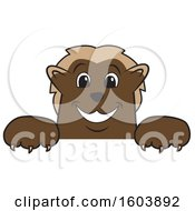 Clipart Of A Wolverine School Mascot Character Over A Sign Royalty Free Vector Illustration