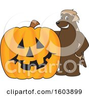 Clipart Of A Wolverine School Mascot Character With A Halloween Pumpkin Royalty Free Vector Illustration