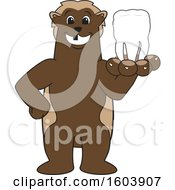 Clipart Of A Wolverine School Mascot Character Holding Out A Tooth Royalty Free Vector Illustration