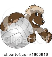 Clipart Of A Wolverine School Mascot Character Grabbing A Volleyball Royalty Free Vector Illustration