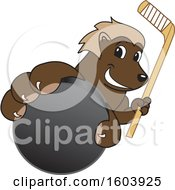 Clipart Of A Wolverine School Mascot Character Holding A Hockey Puck And Stick Royalty Free Vector Illustration