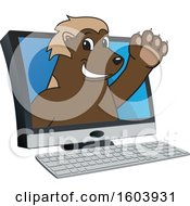 Clipart Of A Wolverine School Mascot Character Emerging From A Computer Screen Royalty Free Vector Illustration