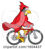 Clipart Of A Red Cardinal Bird School Mascot Character Riding A Bicycle Royalty Free Vector Illustration