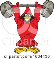Clipart Of A Red Cardinal Bird School Mascot Character Lifting A Heavy Barbell Royalty Free Vector Illustration