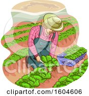 Clipart Of A Female Farmer Kneeling And Harvesting Lettuce Royalty Free Vector Illustration
