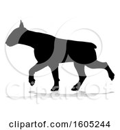 Silhouetted Bull Terrier Dog Running With A Reflection Or Shadow On A White Background