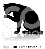 Silhouetted Cat Grooming With A Shadow Or Reflection On A White Background