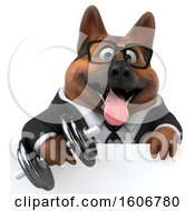 Clipart Of A 3d Business German Shepherd Dog Holding A Dumbbell On A White Background Royalty Free Illustration by Julos