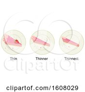 Degree Of Comparison Thin Thinnest Illustration
