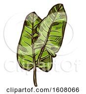 Clipart Of Sketched Sorrel Royalty Free Vector Illustration