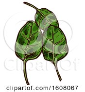 Clipart Of Sketched Spinach Leaves Royalty Free Vector Illustration