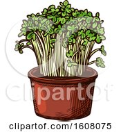 Clipart Of Sketched Watercress Royalty Free Vector Illustration