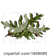 Clipart Of Sketched Arugula Royalty Free Vector Illustration