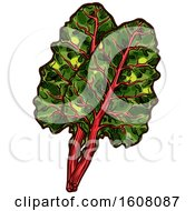 Clipart Of Sketched Chard Leaves Royalty Free Vector Illustration