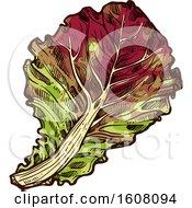 Clipart Of Sketched Oak Leaf Lettuce Royalty Free Vector Illustration