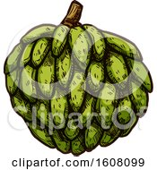Clipart Of A Sketched Cherimoya Royalty Free Vector Illustration