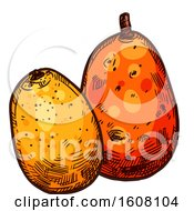 Clipart Of A Sketched Mombin Royalty Free Vector Illustration