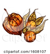 Clipart Of A Sketched Physalis Royalty Free Vector Illustration