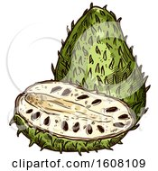 Clipart Of A Sketched Soursop Royalty Free Vector Illustration