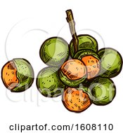 Clipart Of Sketched Spanish Limes Royalty Free Vector Illustration