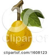 Clipart Of A Tropical Fruit Royalty Free Vector Illustration