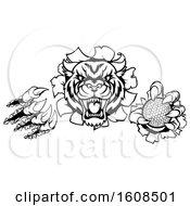 Poster, Art Print Of Black And White Vicious Tiger Mascot Slashing Through A Wall With A Golf Ball