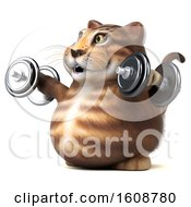September 18th, 2018: Clipart Of A 3d Tabby Kitty Cat Holding Dumbbells On A White Background Royalty Free Illustration by Julos