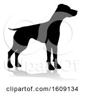 Silhouetted Pointer Dog With A Reflection Or Shadow On A White Background