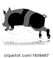 Pig Silhouette Farm Animal With A Reflection Or Shadow On A White Background