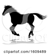 Poster, Art Print Of Horse Silhouette Animal With A Reflection Or Shadow On A White Background