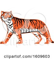 Clipart Of A Walking Bengal Tiger Mascot Royalty Free Vector Illustration by patrimonio