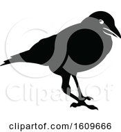 Clipart Of A Halloween Crow Black And White Silhouette Royalty Free Vector Illustration by dero