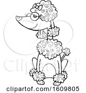 Clipart Of A Black And White Sitting Poodle Dog Royalty Free Vector Illustration