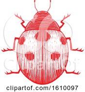 Poster, Art Print Of Sketched Red Ladybug