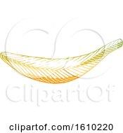 Clipart Of A Sketched Yellow Banana Royalty Free Vector Illustration