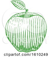 Clipart Of A Sketched Green Apple Royalty Free Vector Illustration