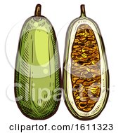 Clipart Of A Sketched Kuruba Tropical Exotic Fruit Royalty Free Vector Illustration