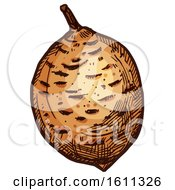 Clipart Of A Sketched Mammee Apple Tropical Exotic Fruit Royalty Free Vector Illustration