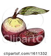 Clipart Of A Sketched Star Apple Tropical Exotic Fruit Royalty Free Vector Illustration